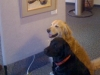Cute picture of the owner\'s dogs - Sarge and Mo. They are the official greeters.